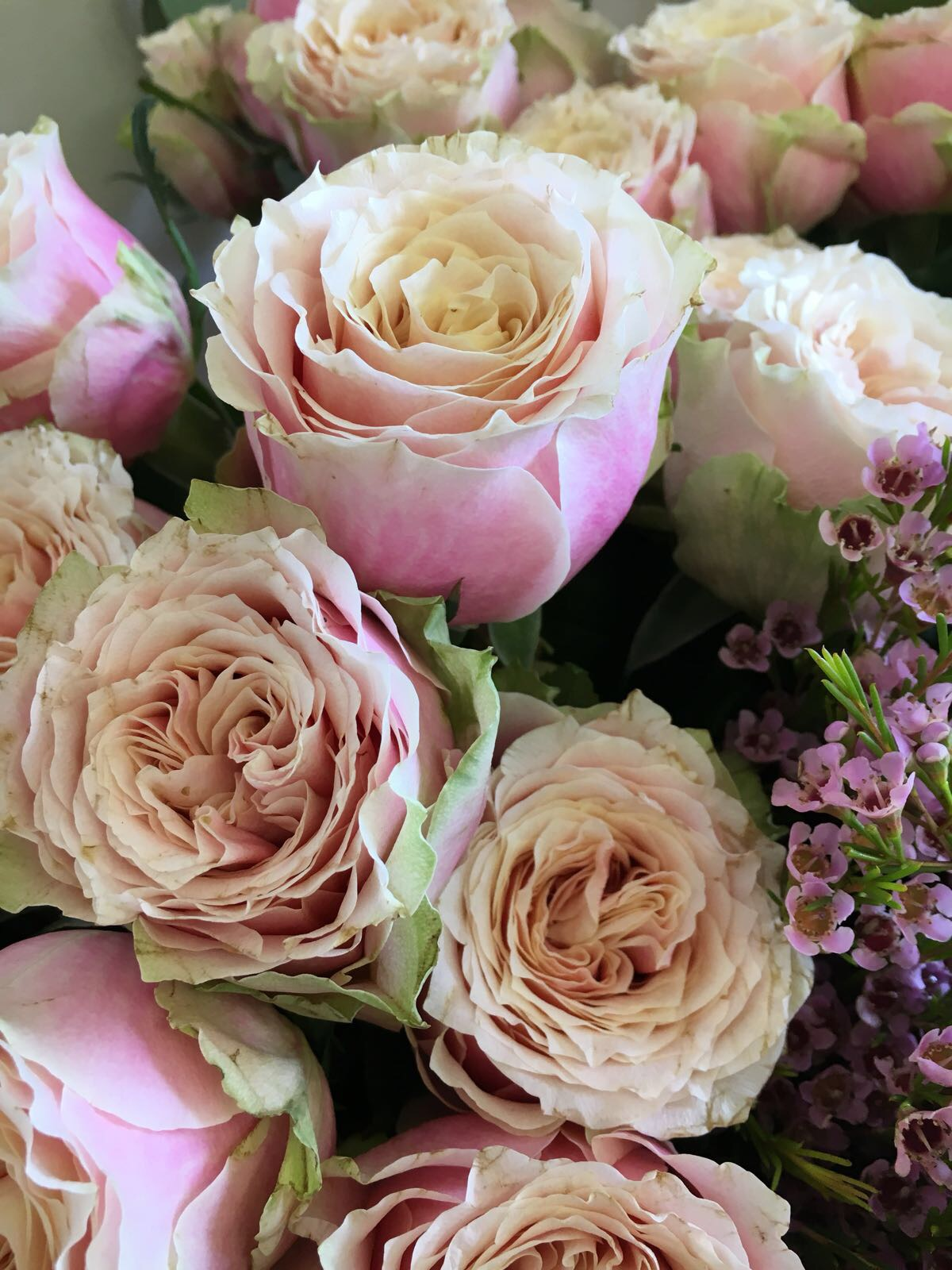 Helen Of Troy Antique pink roses, pink roses, vintage roses, wedding bouquet