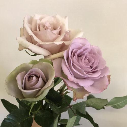 vintage roses for winter wedding